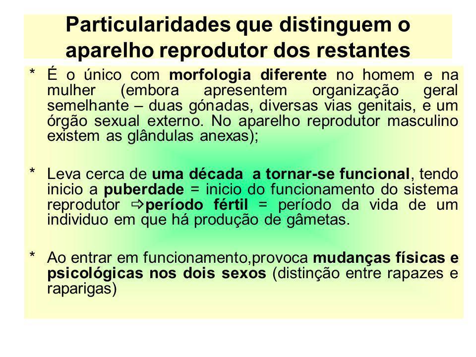 Particularidades que distinguem o aparelho reprodutor dos restantes *É o único com morfologia diferente no homem e na mulher (embora apresentem organi