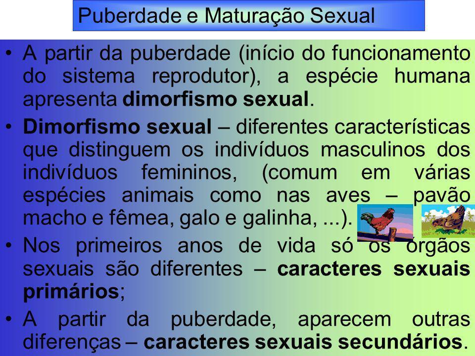 A partir da puberdade (início do funcionamento do sistema reprodutor), a espécie humana apresenta dimorfismo sexual. Dimorfismo sexual – diferentes ca