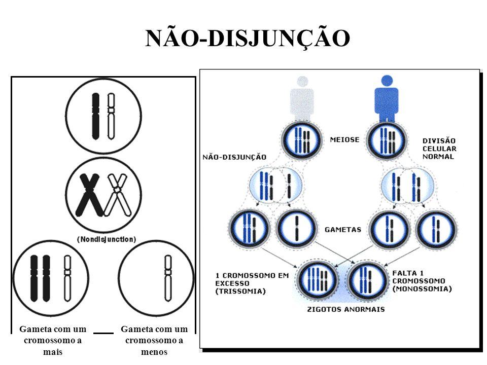 NÚMERO DE CROMOSSOMOS ALTERADO CAUSA – NÃO-DISJUNÇÃO ABERRAÇÃO PODE SER AUTOSSÔMICA (MAIS COMUNS: 13, 18 e 21) OU SEXUAL (X OU Y)
