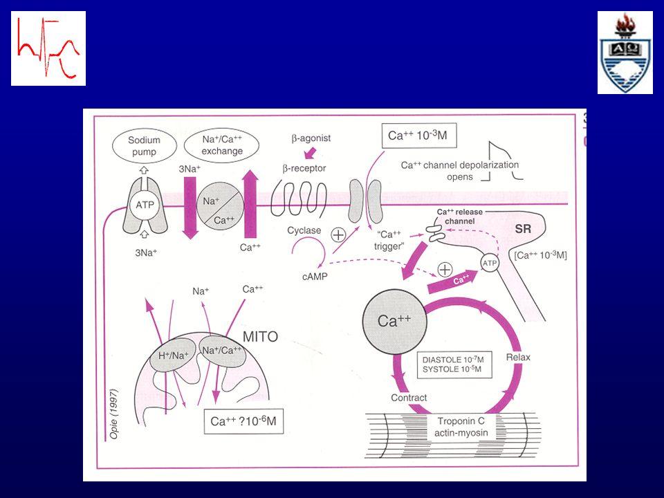 A função do coração está determinada por 3 fatores: a)PRÉ-CARGA = condiciona o comprimento inicial da fibra; é análoga à pressão no final da diástole b)PÓS-CARGA = é resultado das relações entre P intraventricular, volume e espessura das paredes ventriculares; equivale à pressão aórtica c)CONTRATILIDADE = fator mais difícil de estudar já que seu mecanismo não está totalmente entendido.