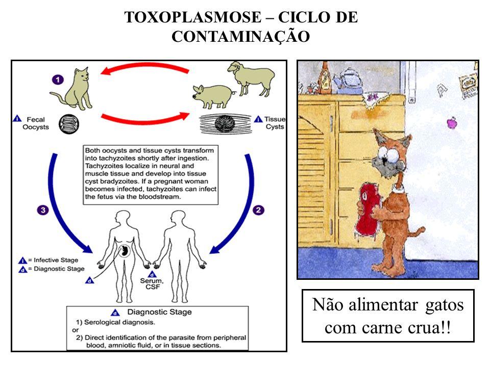 TOXOPLASMOSE – CICLO DE CONTAMINAÇÃO Não alimentar gatos com carne crua!!