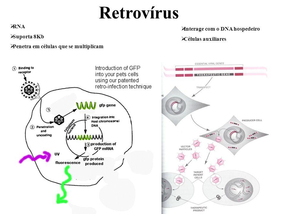 RNA Suporta 8Kb Penetra em células que se multiplicam Interage com o DNA hospedeiro Células auxiliares