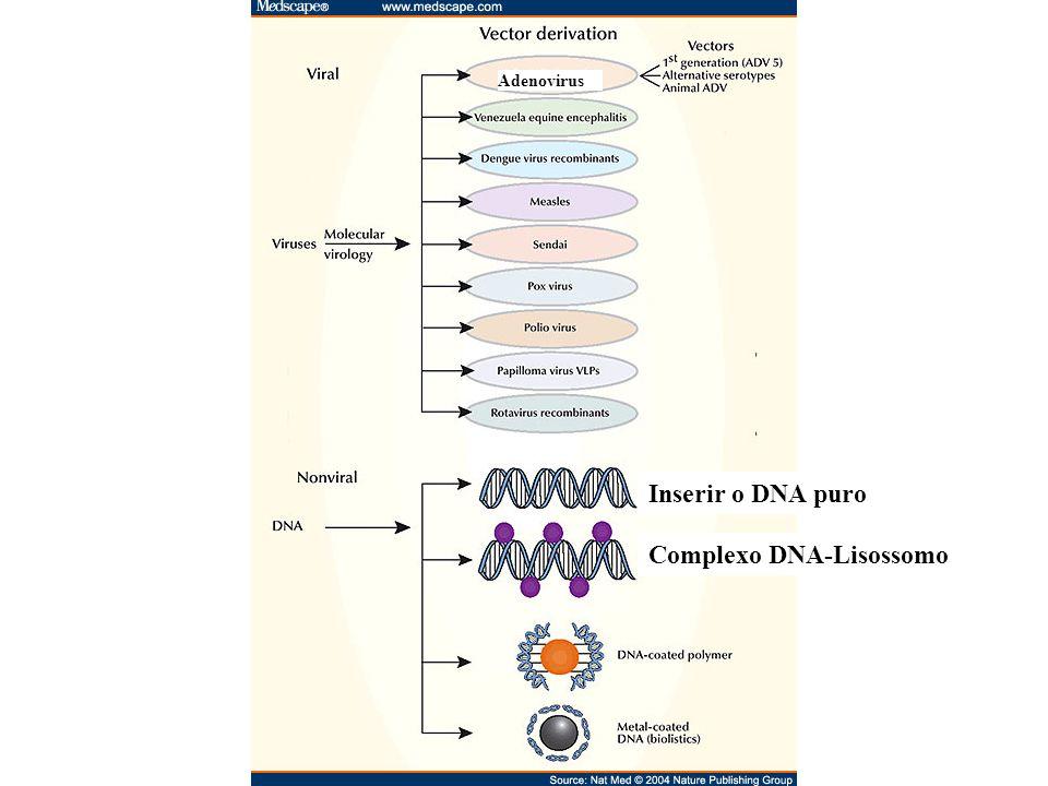 Inserir o DNA puro Complexo DNA-Lisossomo Adenovirus