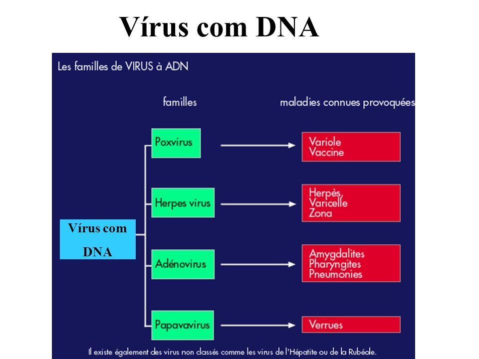 Vírus com DNA Vírus com DNA