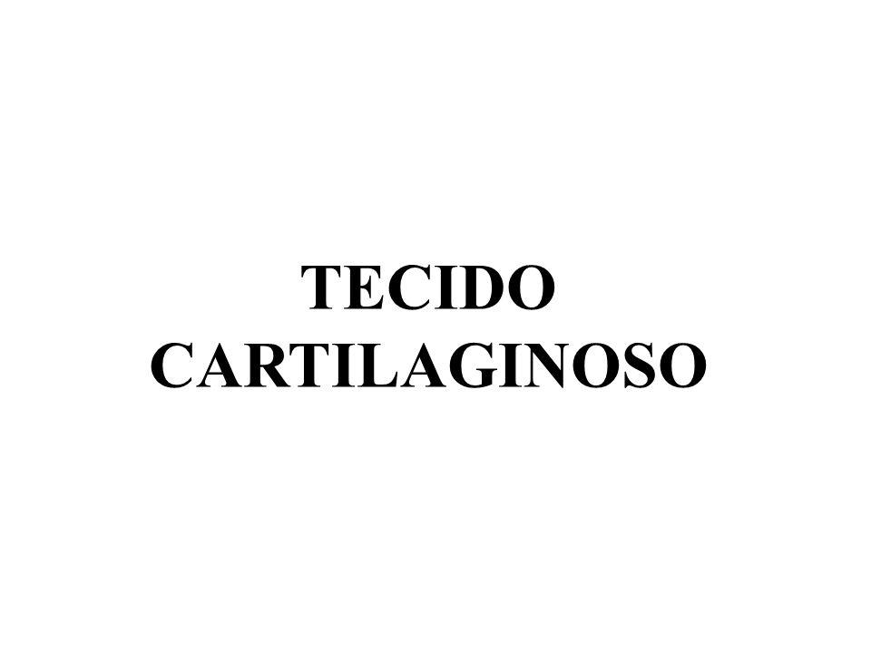 Colágeno Ácido hialurônico Proteoglicana Matriz cartilaginosaCélulas: condrócitos ELEMENTOS CONSTITUINTES DA CARTILAGEM Lacunas
