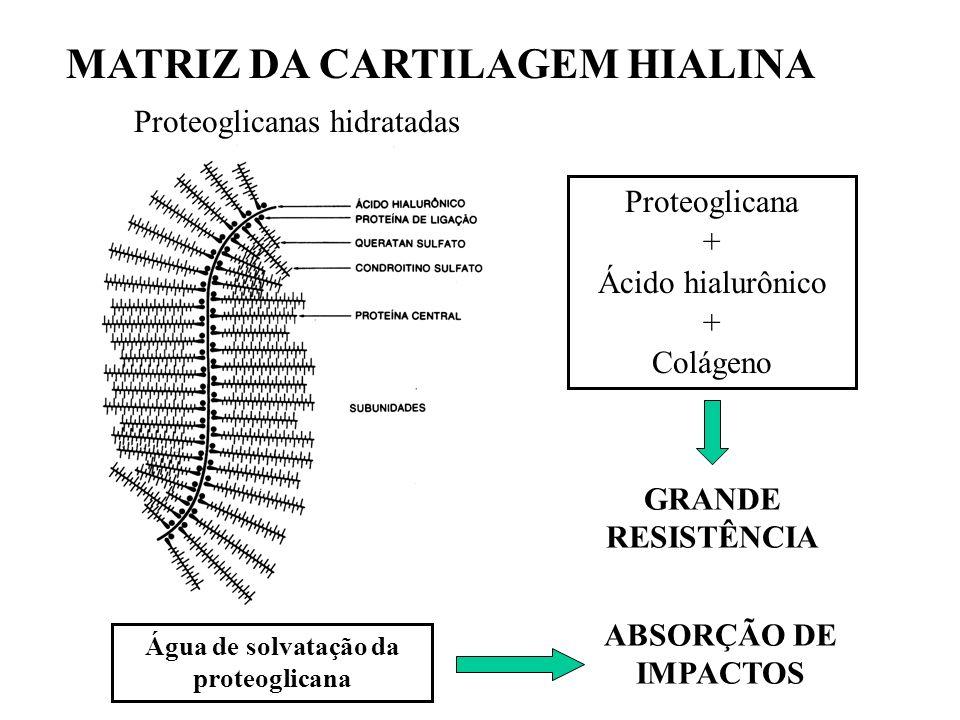 PERICÔNDRIO Pericôndrio Tecido conjuntivo denso Fonte de novos condrócitos Nutrição e oxigenação da cartilagem