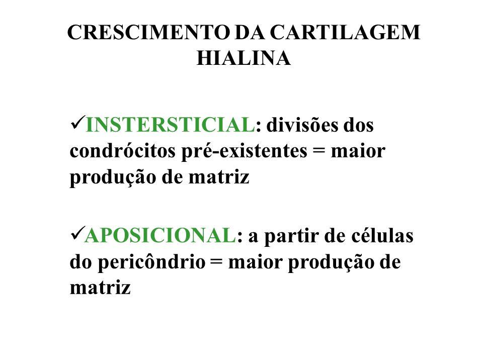 INTERFACE PERICÔNDRIO-CARTILAGEM