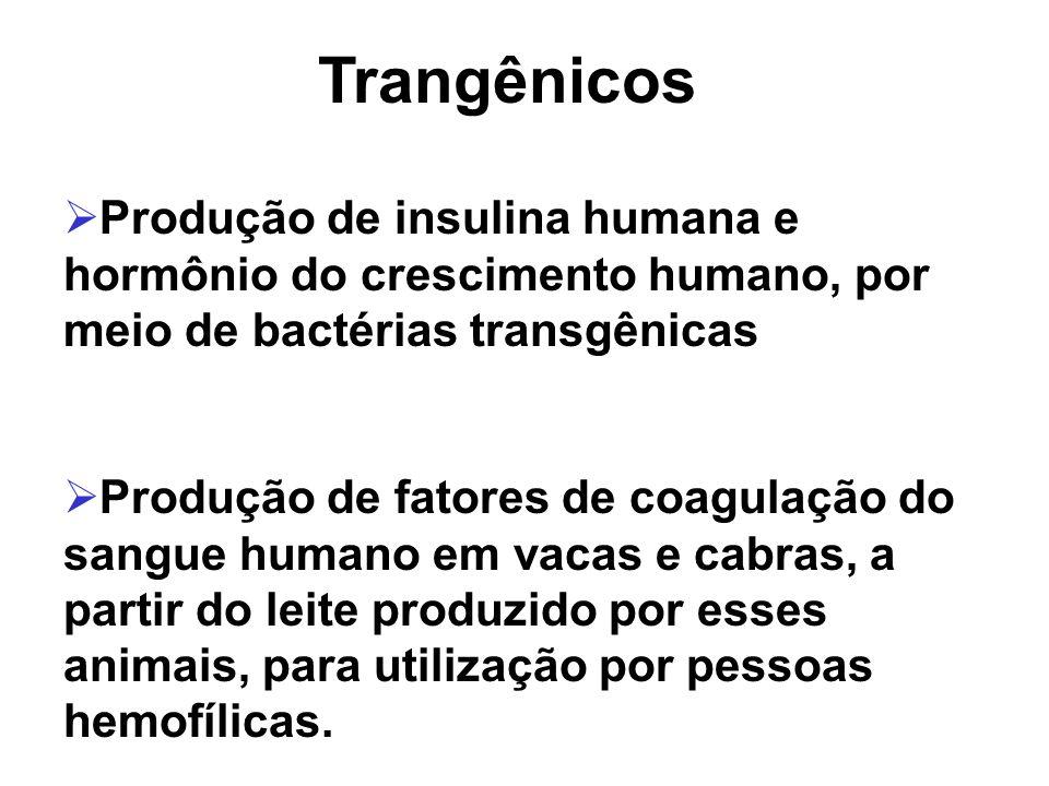 Produção de insulina humana e hormônio do crescimento humano, por meio de bactérias transgênicas Produção de fatores de coagulação do sangue humano em