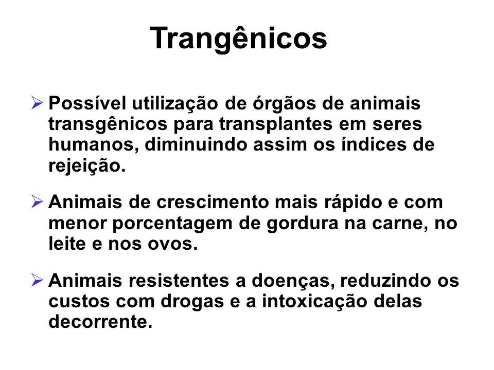 Possível utilização de órgãos de animais transgênicos para transplantes em seres humanos, diminuindo assim os índices de rejeição. Animais de crescime