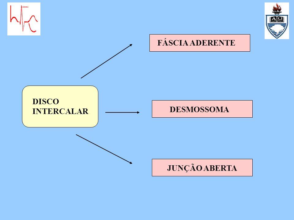 DISCO INTERCALAR FÁSCIA ADERENTE DESMOSSOMA JUNÇÃO ABERTA