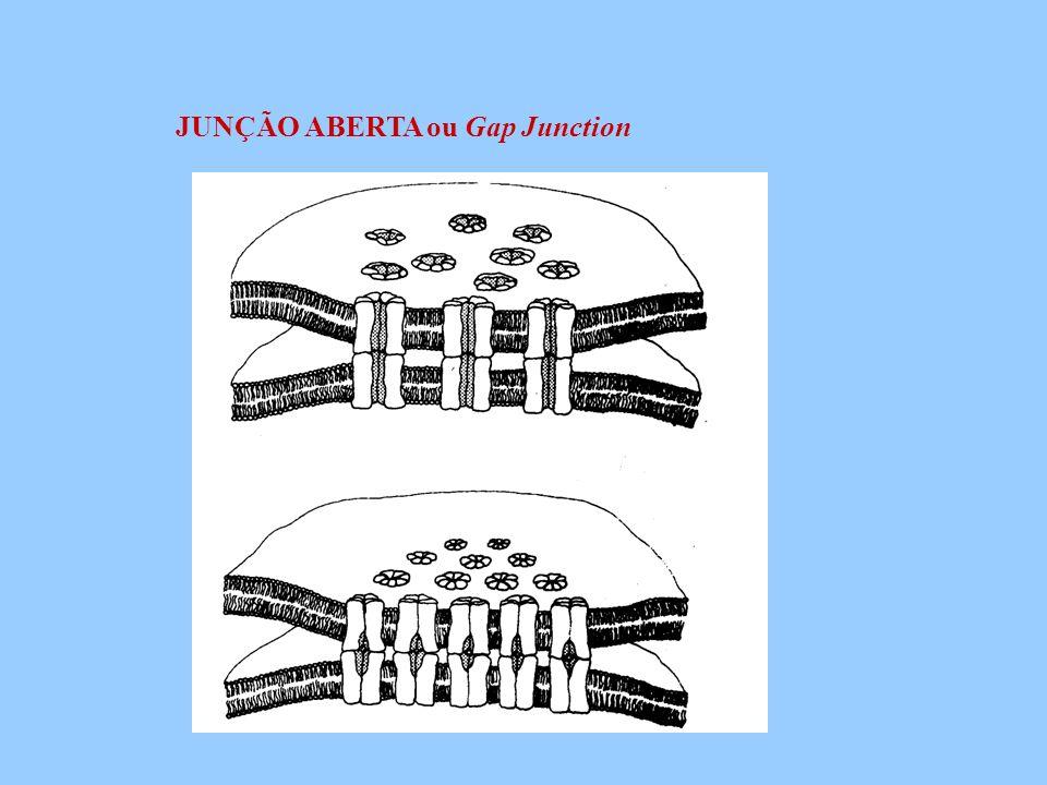 JUNÇÃO ABERTA ou Gap Junction