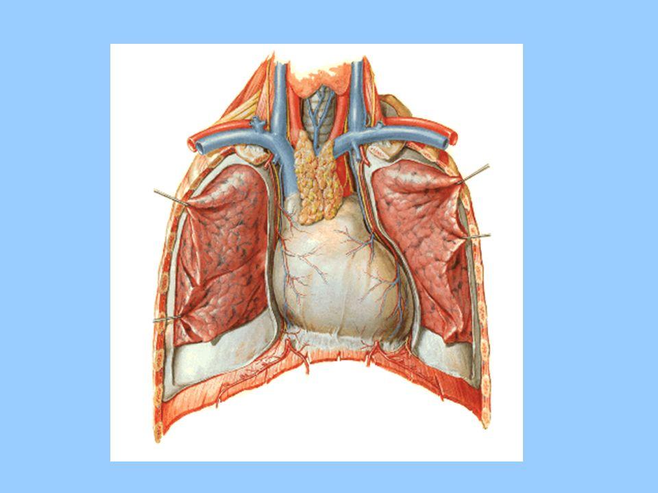 PROTEÍNAS SARCOMÉRICAS: a) CONTRÁTEIS – actina e miosina b) MODULADORAS – troponina e tropomiosina c) ESTRUTURAIS - actinina, conectina ou titina,vimentina, espectrina, anquinina ATPase miosínica – ISOFORMAS HUMANOS -, RATO - V1, V2, V3, V1- hidrólise lenta de ATP, V3- hidrólise rápida de ATP ATPase miosínica + exercício físico, hipertireoidismo - idade, IC, insuficiência adrenal, inatividade física
