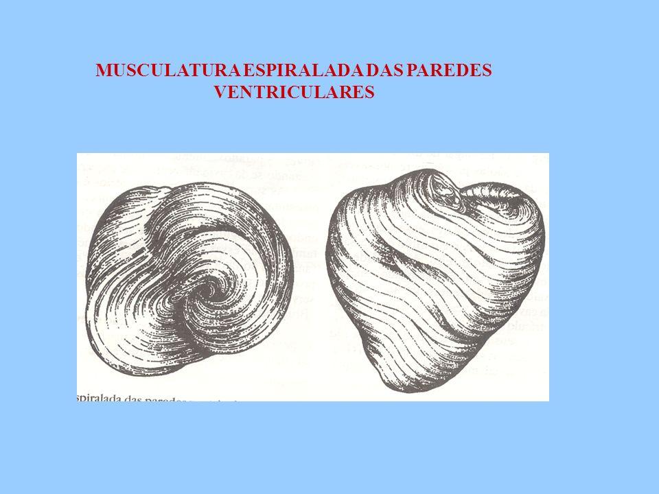 MUSCULATURA ESPIRALADA DAS PAREDES VENTRICULARES