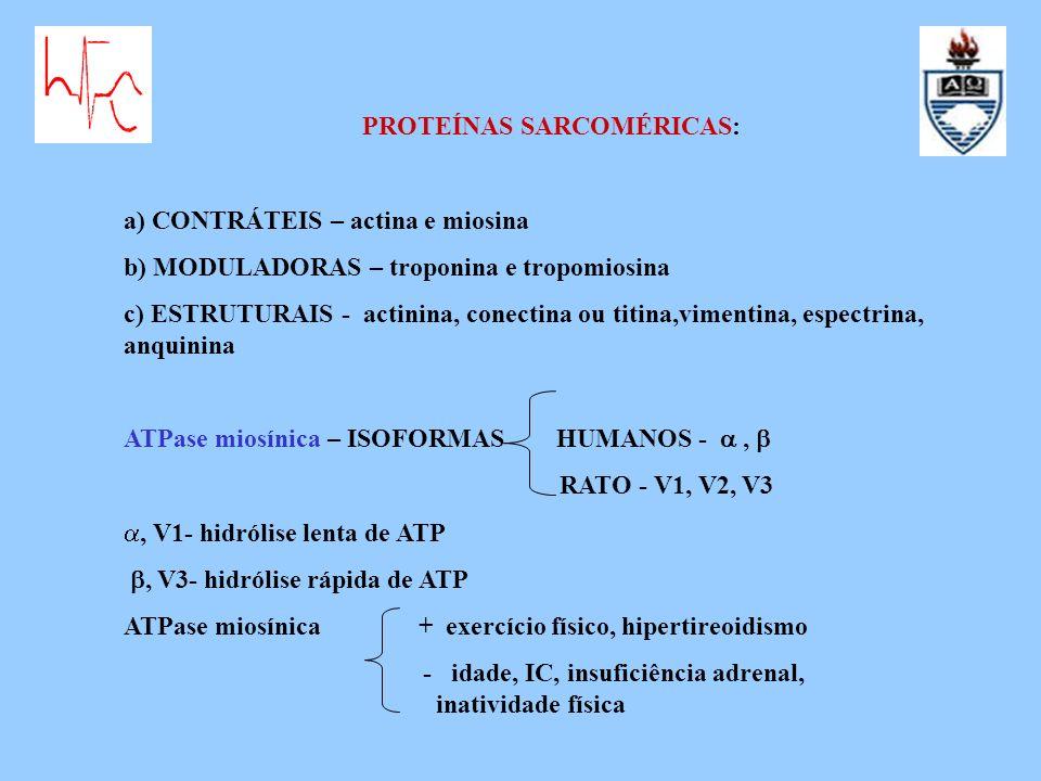 PROTEÍNAS SARCOMÉRICAS: a) CONTRÁTEIS – actina e miosina b) MODULADORAS – troponina e tropomiosina c) ESTRUTURAIS - actinina, conectina ou titina,vime