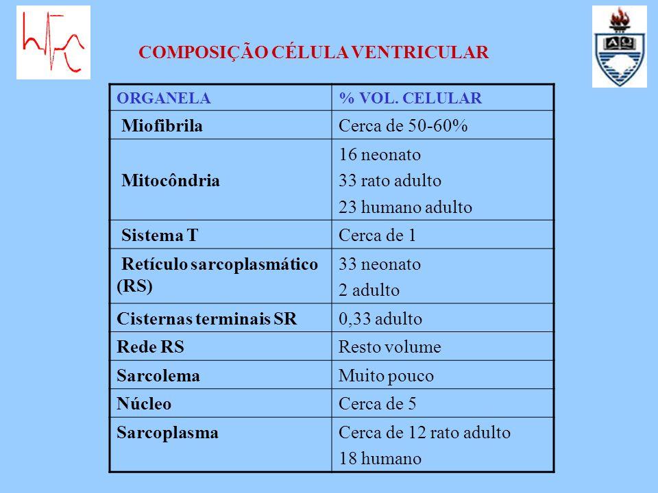 ORGANELA% VOL. CELULAR MiofibrilaCerca de 50-60% Mitocôndria 16 neonato 33 rato adulto 23 humano adulto Sistema TCerca de 1 Retículo sarcoplasmático (