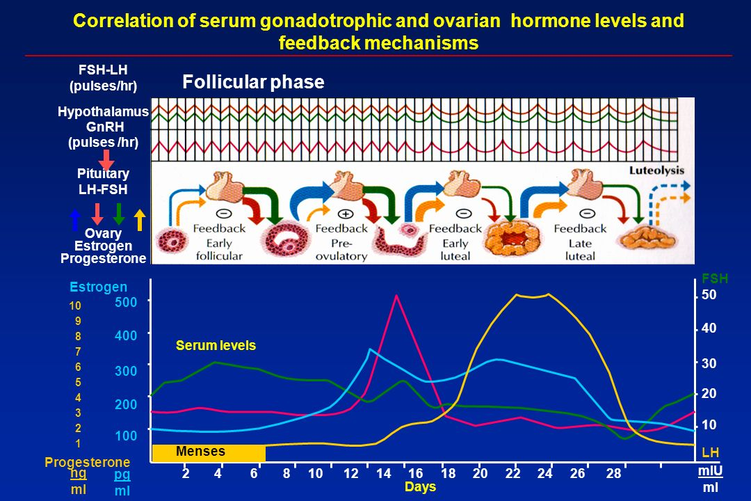 Hypothalamus GnRH (pulses /hr) Pituitary LH-FSH Ovary Estrogen Progesterone Correlation of serum gonadotrophic and ovarian hormone levels and feedback