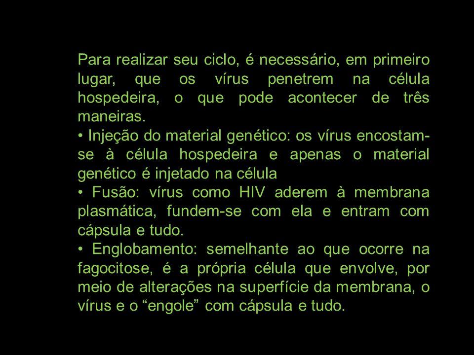 Para realizar seu ciclo, é necessário, em primeiro lugar, que os vírus penetrem na célula hospedeira, o que pode acontecer de três maneiras. Injeção d