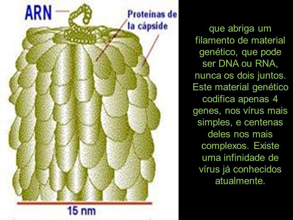 que abriga um filamento de material genético, que pode ser DNA ou RNA, nunca os dois juntos. Este material genético codifica apenas 4 genes, nos vírus