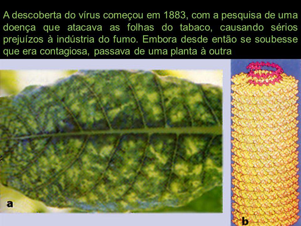 A descoberta do vírus começou em 1883, com a pesquisa de uma doença que atacava as folhas do tabaco, causando sérios prejuízos à indústria do fumo. Em