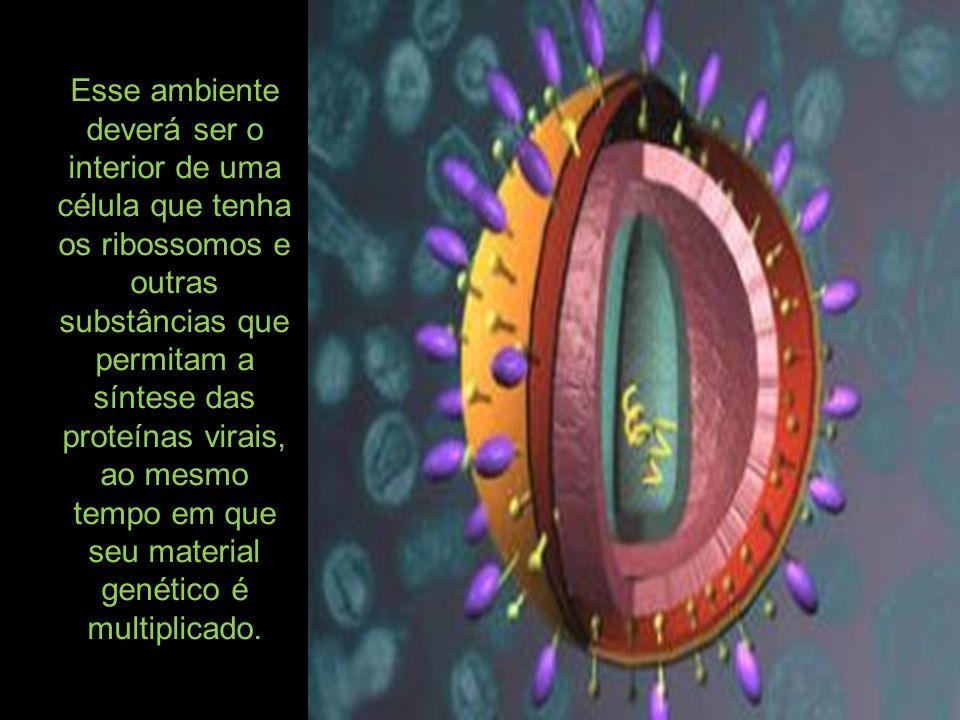 Esse ambiente deverá ser o interior de uma célula que tenha os ribossomos e outras substâncias que permitam a síntese das proteínas virais, ao mesmo t