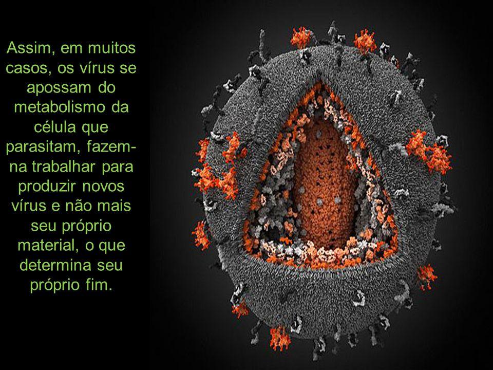 Assim, em muitos casos, os vírus se apossam do metabolismo da célula que parasitam, fazem- na trabalhar para produzir novos vírus e não mais seu própr