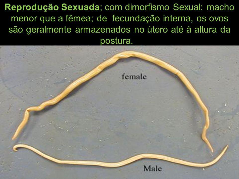Reprodução Sexuada; com dimorfismo Sexual: macho menor que a fêmea; de fecundação interna, os ovos são geralmente armazenados no útero até à altura da