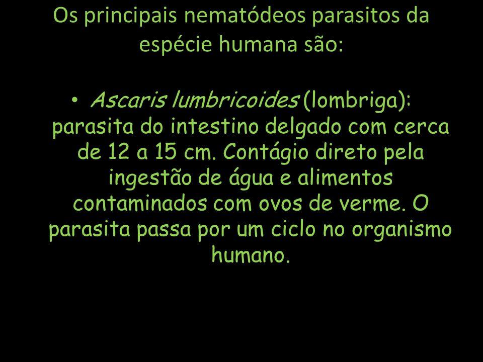 Os principais nematódeos parasitos da espécie humana são: Ascaris lumbricoides (lombriga): parasita do intestino delgado com cerca de 12 a 15 cm. Cont