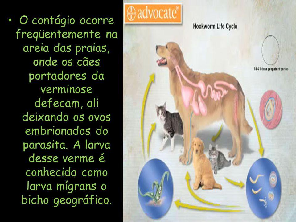 O contágio ocorre freqüentemente na areia das praias, onde os cães portadores da verminose defecam, ali deixando os ovos embrionados do parasita. A la
