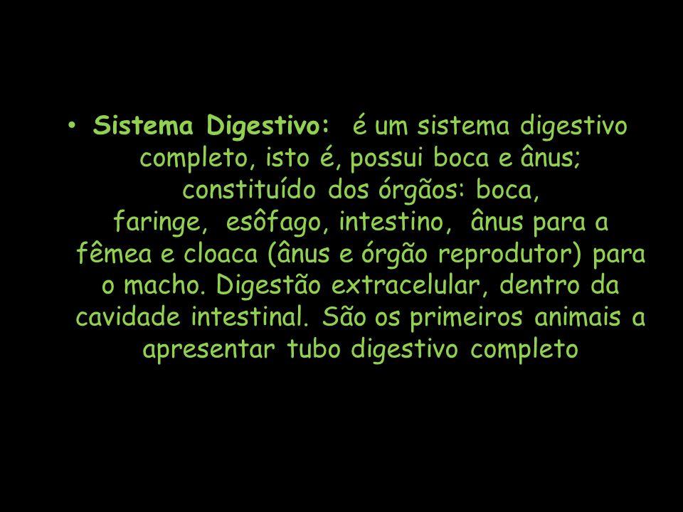 Sistema Digestivo: é um sistema digestivo completo, isto é, possui boca e ânus; constituído dos órgãos: boca, faringe, esôfago, intestino, ânus para a