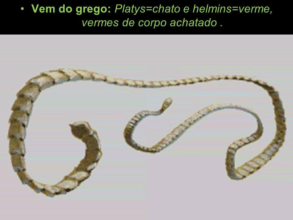 Vem do grego: Platys=chato e helmins=verme, vermes de corpo achatado.