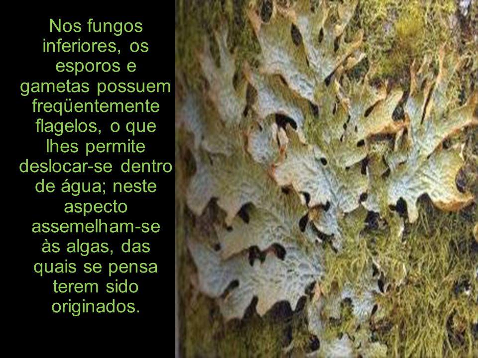 Nos fungos inferiores, os esporos e gametas possuem freqüentemente flagelos, o que lhes permite deslocar-se dentro de água; neste aspecto assemelham-se às algas, das quais se pensa terem sido originados.