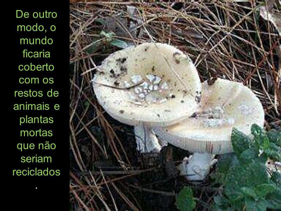 Os esporos e a maneira como estes são formados são usados como a base principal para a classificação dos fungos.