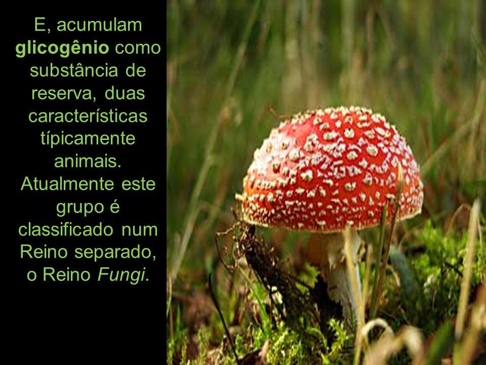 E, Mixomycota (fungos gelatinosos), hoje incluídos no Reino Protista ou Protoctista.
