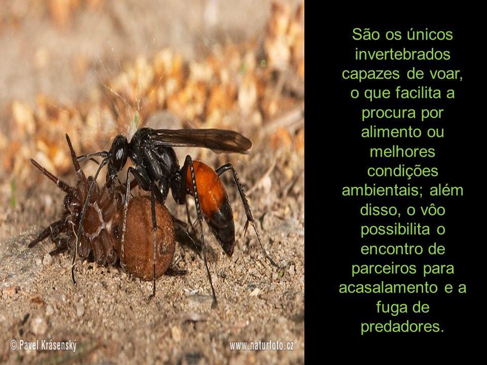 São os únicos invertebrados capazes de voar, o que facilita a procura por alimento ou melhores condições ambientais; além disso, o vôo possibilita o e