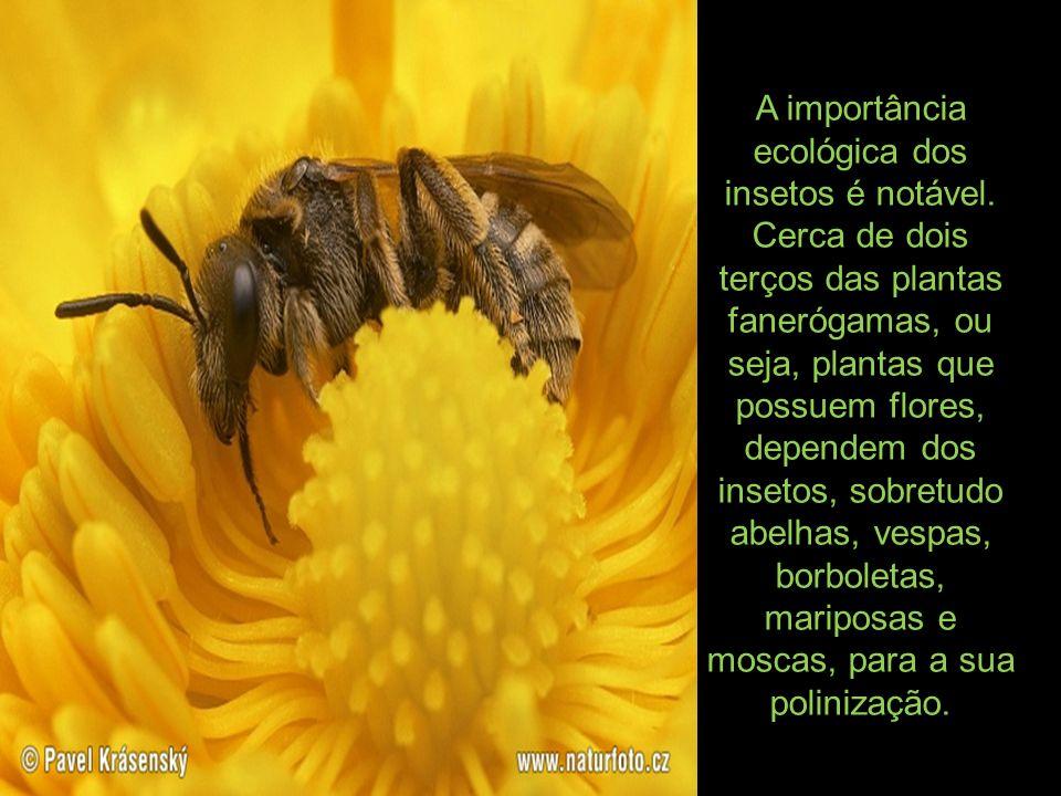 A importância ecológica dos insetos é notável. Cerca de dois terços das plantas fanerógamas, ou seja, plantas que possuem flores, dependem dos insetos