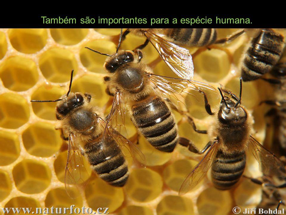 Também são importantes para a espécie humana.