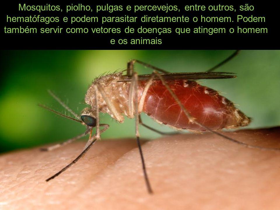 Mosquitos, piolho, pulgas e percevejos, entre outros, são hematófagos e podem parasitar diretamente o homem. Podem também servir como vetores de doenç
