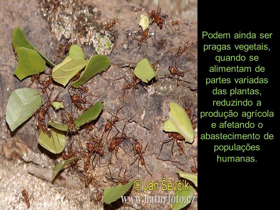 Podem ainda ser pragas vegetais, quando se alimentam de partes variadas das plantas, reduzindo a produção agrícola e afetando o abastecimento de popul