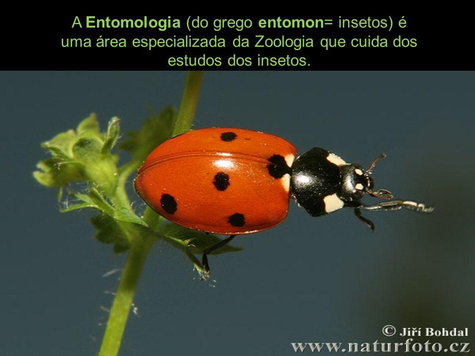 A Entomologia (do grego entomon= insetos) é uma área especializada da Zoologia que cuida dos estudos dos insetos.