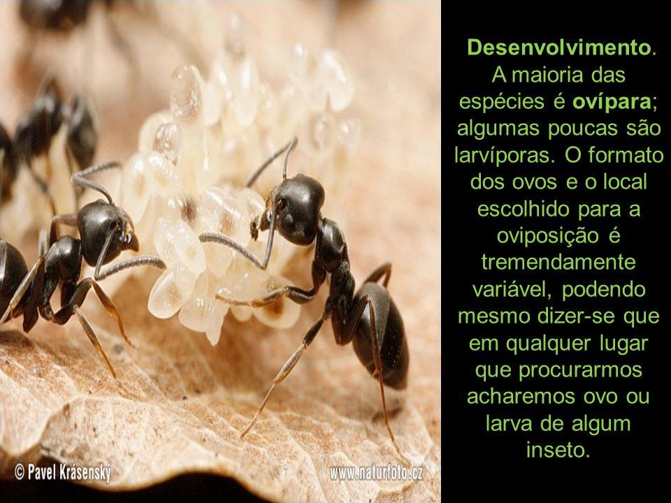Desenvolvimento. A maioria das espécies é ovípara; algumas poucas são larvíporas. O formato dos ovos e o local escolhido para a oviposição é tremendam