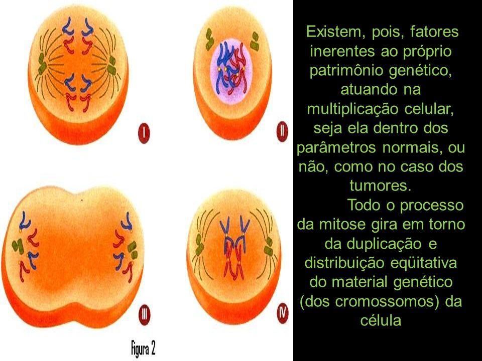Existem, pois, fatores inerentes ao próprio patrimônio genético, atuando na multiplicação celular, seja ela dentro dos parâmetros normais, ou não, com