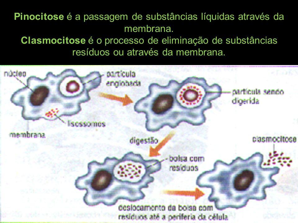 Pinocitose é a passagem de substâncias líquidas através da membrana. Clasmocitose é o processo de eliminação de substâncias resíduos ou através da mem