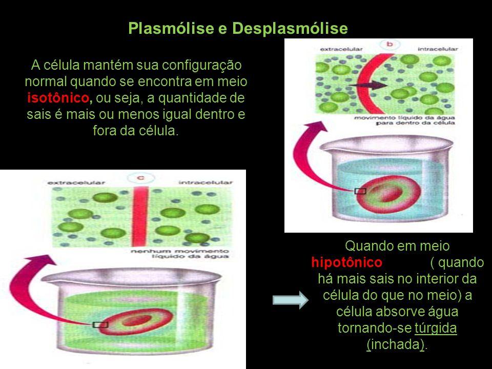 Plasmólise e Desplasmólise A célula mantém sua configuração normal quando se encontra em meio isotônico, ou seja, a quantidade de sais é mais ou menos