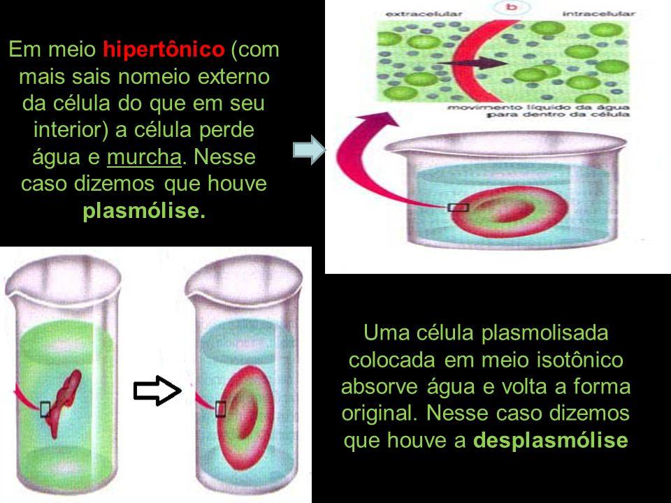 Em meio hipertônico (com mais sais nomeio externo da célula do que em seu interior) a célula perde água e murcha. Nesse caso dizemos que houve plasmól