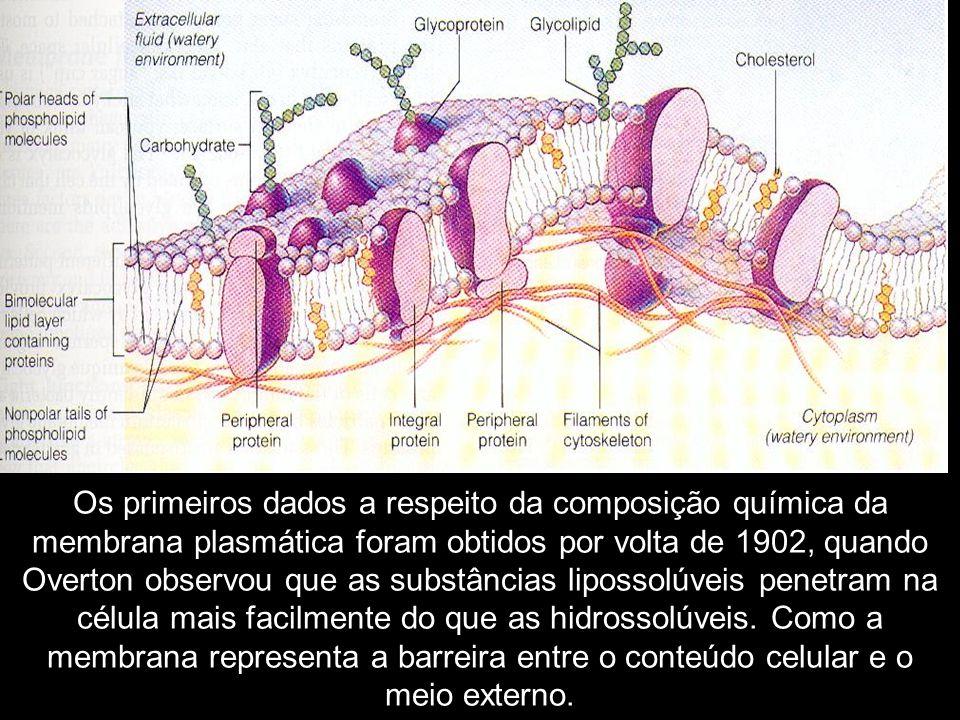 Os primeiros dados a respeito da composição química da membrana plasmática foram obtidos por volta de 1902, quando Overton observou que as substâncias