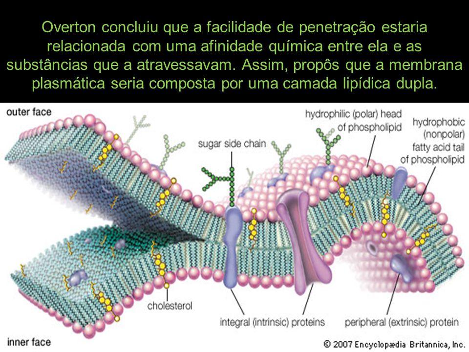 Overton concluiu que a facilidade de penetração estaria relacionada com uma afinidade química entre ela e as substâncias que a atravessavam. Assim, pr