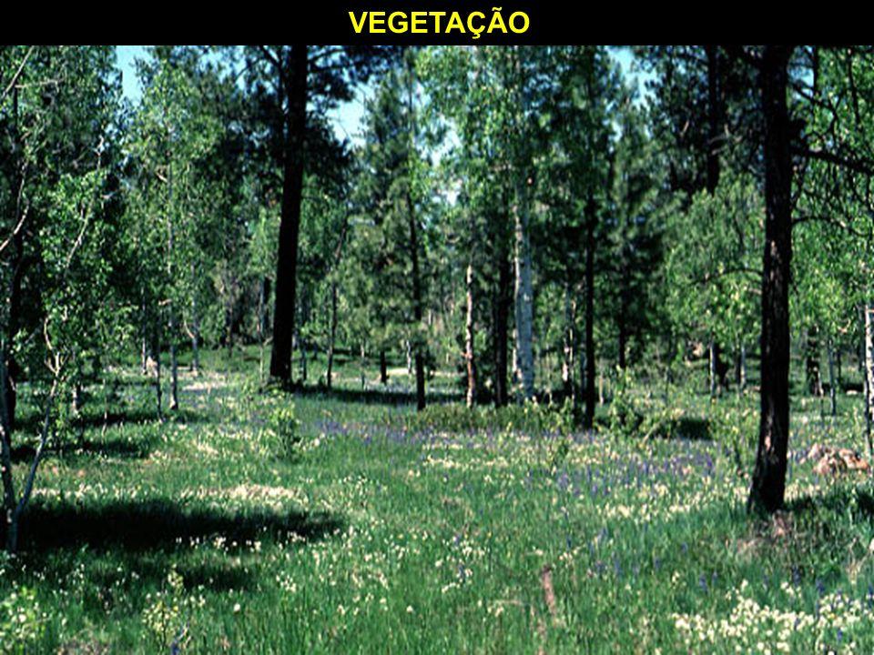 A vegetação é reflexo das condições naturais de solo e de clima do lugar em que ocorre.