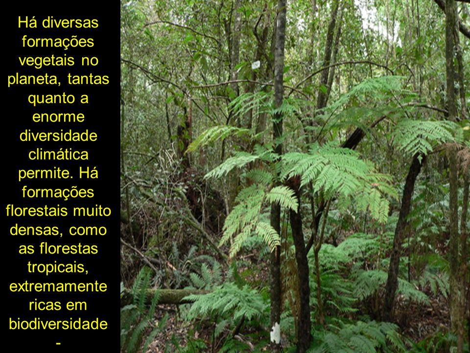 Há diversas formações vegetais no planeta, tantas quanto a enorme diversidade climática permite. Há formações florestais muito densas, como as florest