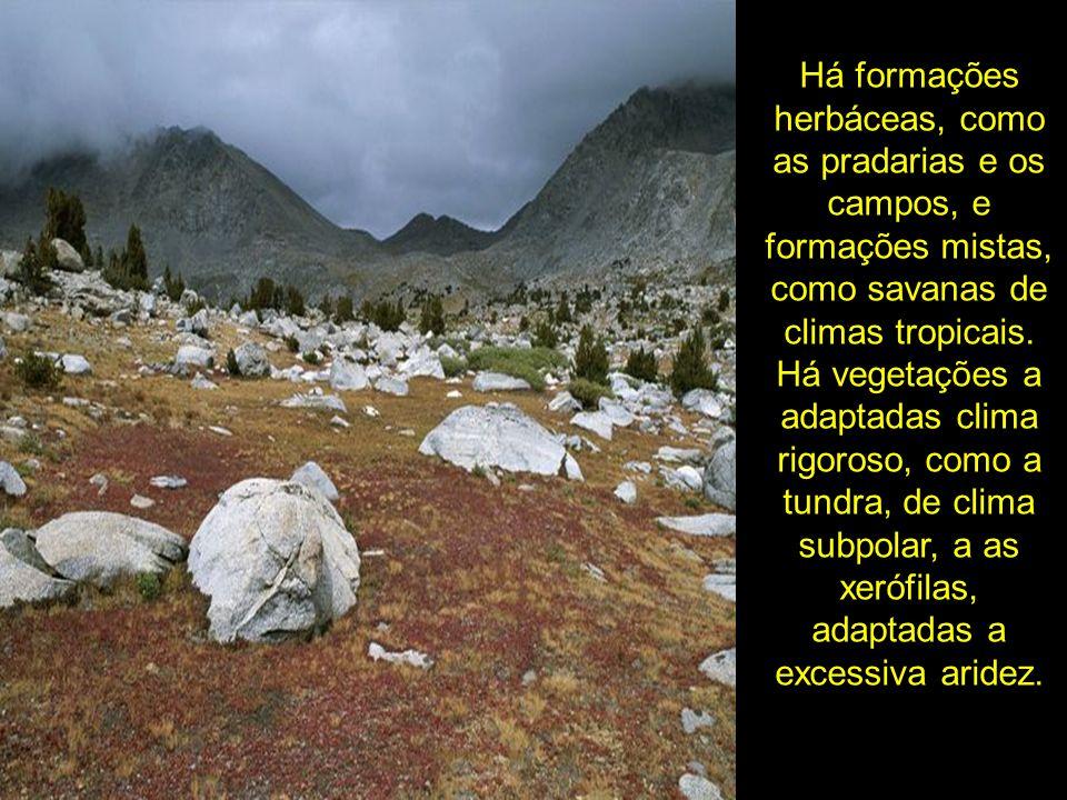 Há formações herbáceas, como as pradarias e os campos, e formações mistas, como savanas de climas tropicais. Há vegetações a adaptadas clima rigoroso,