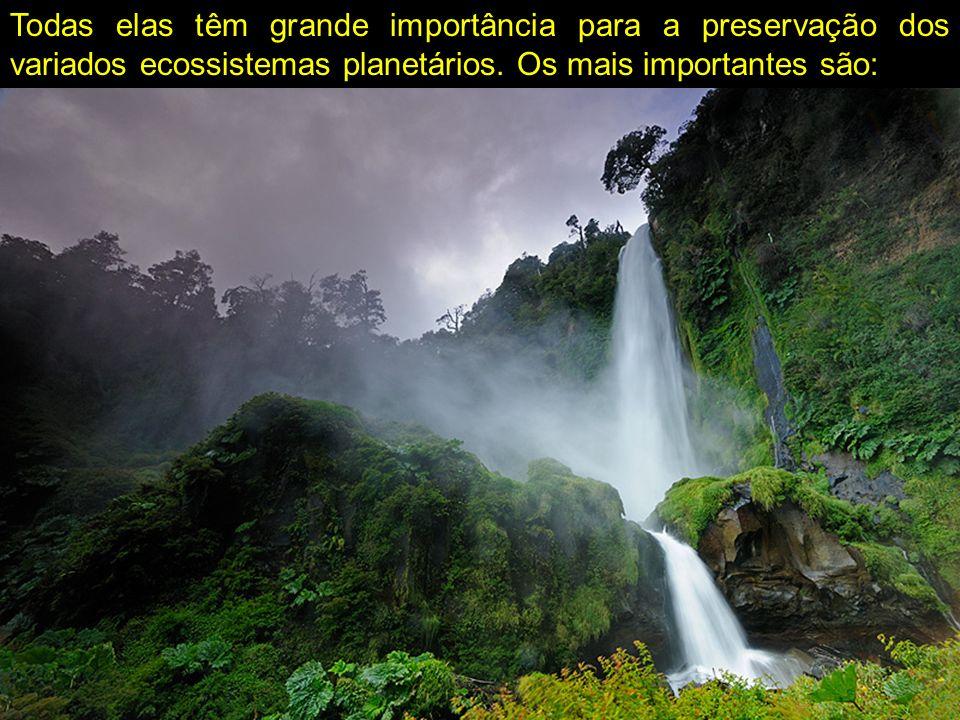Todas elas têm grande importância para a preservação dos variados ecossistemas planetários. Os mais importantes são: